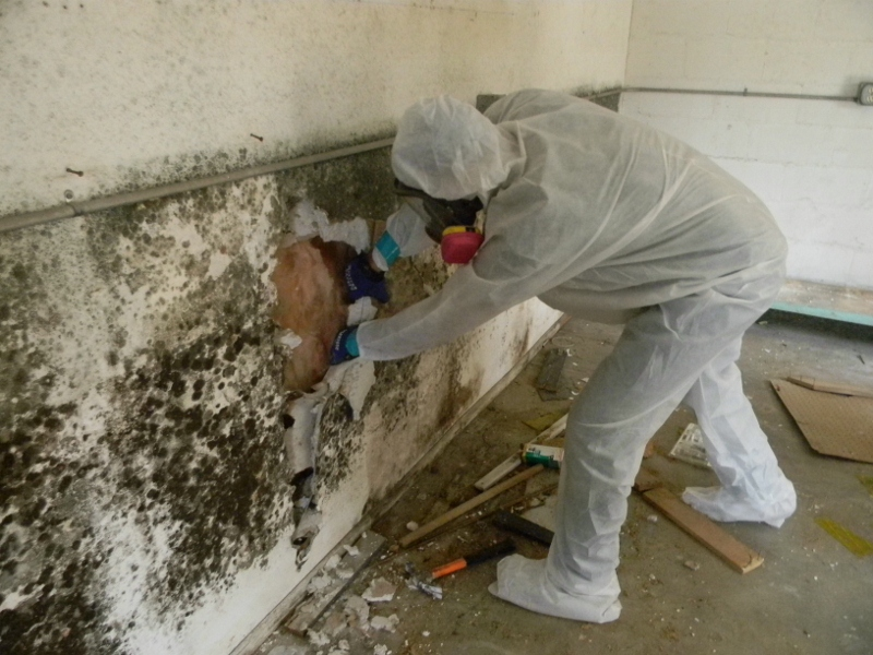 Mold-Removal-Remediation-Kahului-Maui-1